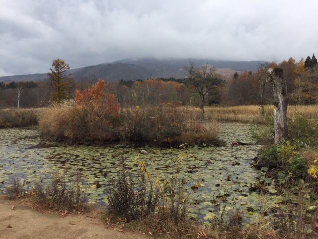 晩秋のいもり池