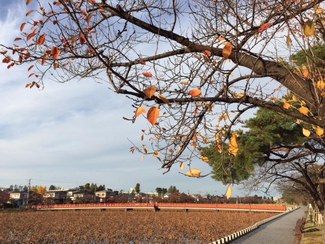 高田公園も晩秋のたたずまい