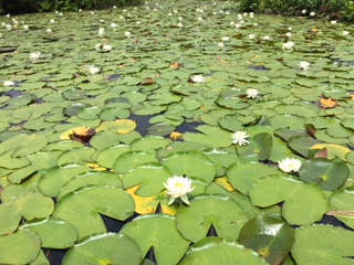 初夏のいもり池