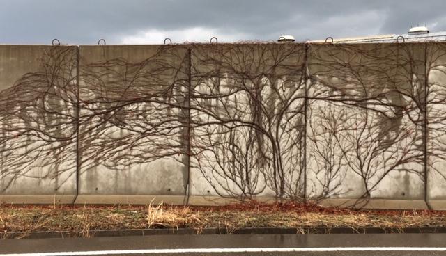 壁と蔦その2